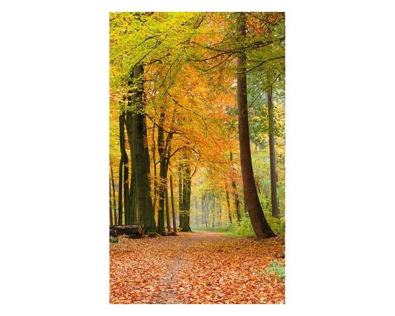 Vliesové fototapety na zeď Podzimní les   MS-2-0099   150x250 cm - Fototapety vliesové