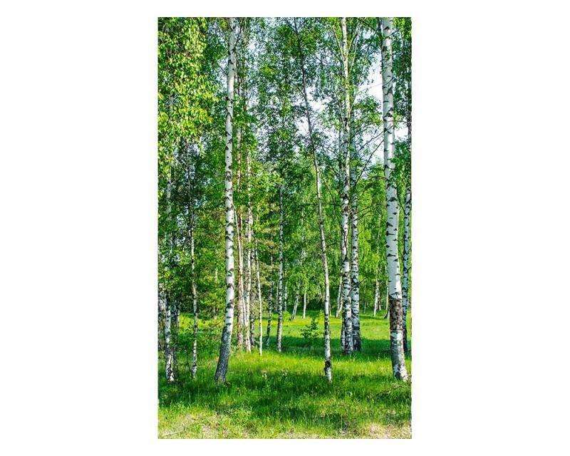 Vliesové fototapety na zeď Březový háj | MS-2-0100 | 150x250 cm - Fototapety vliesové