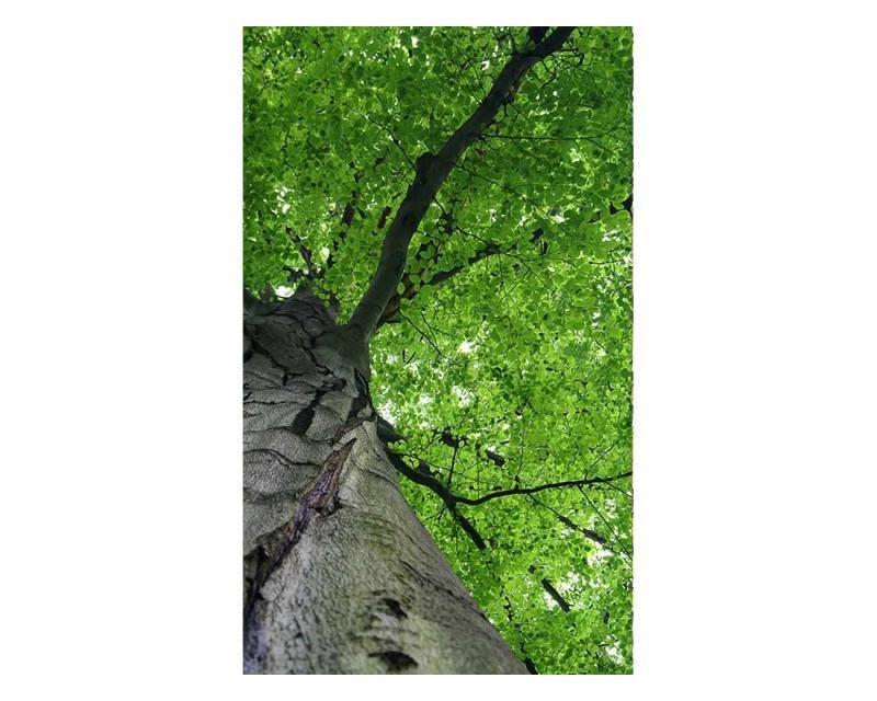 Vliesové fototapety na zeď Koruna stromu | MS-2-0101 | 150x250 cm - Fototapety vliesové
