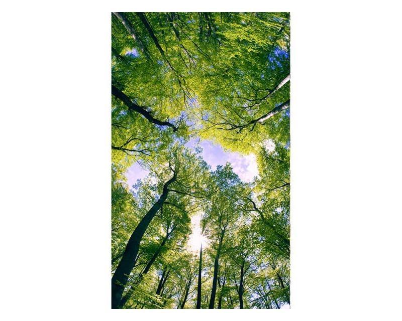 Vliesové fototapety na zeď Stromy v oblacích | MS-2-0104 | 150x250 cm - Fototapety vliesové