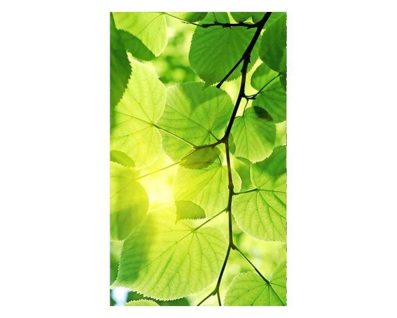 Vliesové fototapety na zeď Zelené listy | MS-2-0107 | 150x250 cm - Fototapety vliesové