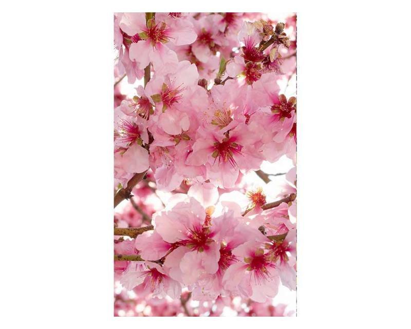 Vliesové fototapety na zeď Květy jabloní | MS-2-0108 | 150x250 cm - Fototapety vliesové