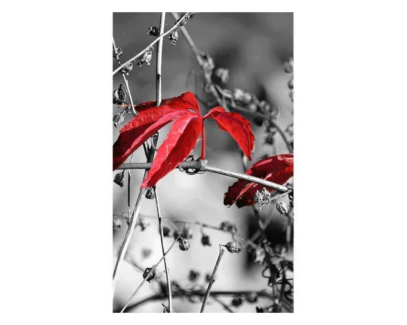 Vliesové fototapety na zeď červené listí na černém pozadí | MS-2-0110 | 150x250 cm - Fototapety vliesové