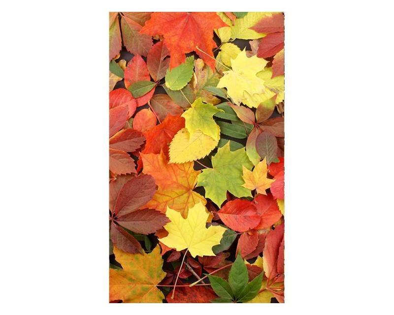 Vliesové fototapety na zeď Pestrobarevné listí | MS-2-0115 | 150x250 cm - Fototapety vliesové