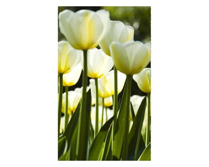 Vliesové fototapety na zeď Bílé tulipány   MS-2-0127   150x250 cm - Fototapety vliesové