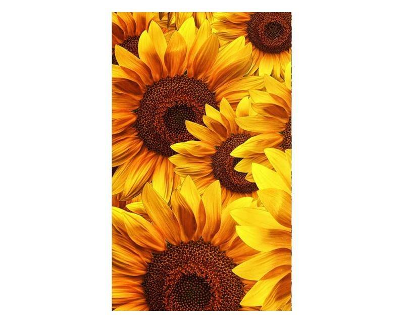 Vliesové fototapety na zeď Lán slunečnic | MS-2-0129 | 150x250 cm - Fototapety vliesové