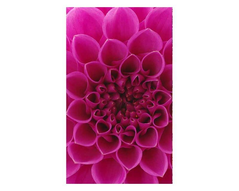 Vliesové fototapety na zeď Růžová jiřina | MS-2-0132 | 150x250 cm - Fototapety vliesové