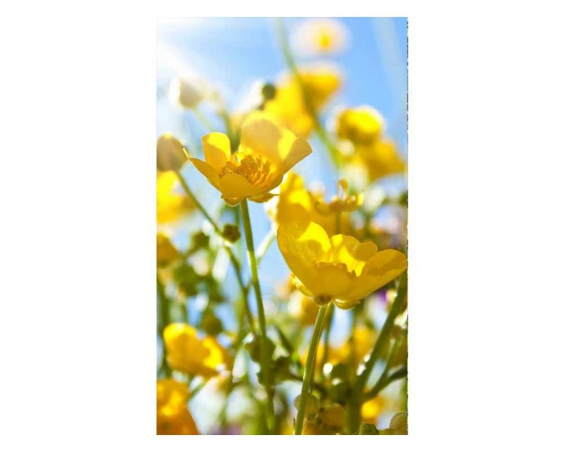 Vliesové fototapety na zeď Žluté květiny | MS-2-0134 | 150x250 cm - Fototapety vliesové