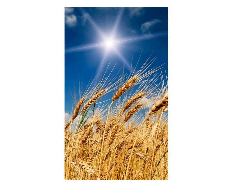 Vliesové fototapety na zeď Pšeničné pole | MS-2-0136 | 150x250 cm - Fototapety vliesové