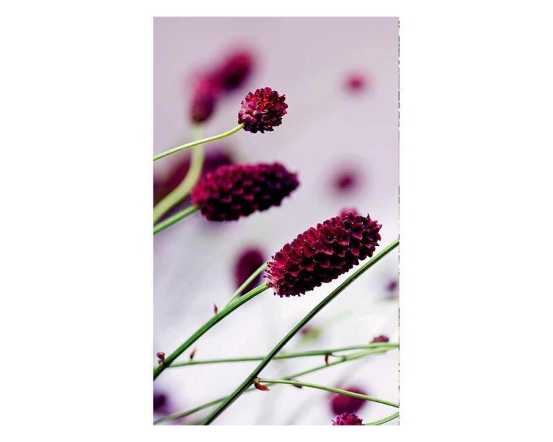 Vliesové fototapety na zeď Fialová květina | MS-2-0141 | 150x250 cm - Fototapety vliesové