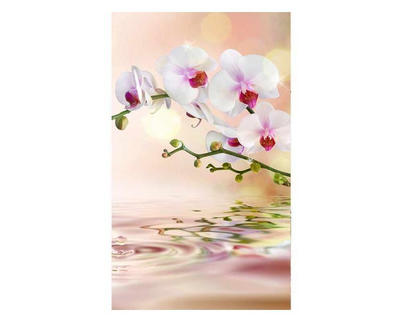 Vliesové fototapety na zeď Bílá orchidej | MS-2-0147 | 150x250 cm - Fototapety vliesové