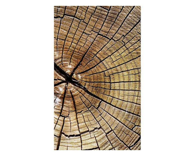 Vliesové fototapety na zeď Letokruhy | MS-2-0162 | 150x250 cm - Fototapety vliesové
