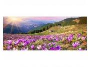 Panoramatické vliesové fototapety na zeď Krokusy na jaře | MP-2-0064 | 375x150 cm Fototapety vliesové