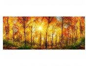 Panoramatické vliesové fototapety na zeď Slunečný les | MP-2-0067 | 375x150 cm Fototapety vliesové