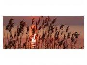 Panoramatické vliesové fototapety na zeď Rákos na jezeře | MP-2-0089 | 375x150 cm Fototapety vliesové