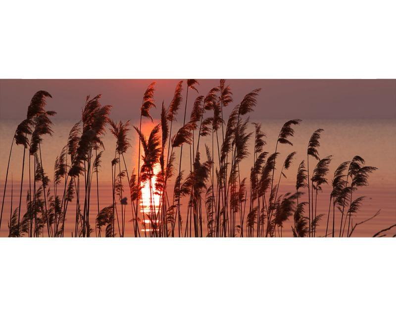 Panoramatické vliesové fototapety na zeď Rákos na jezeře   MP-2-0089   375x150 cm - Fototapety vliesové