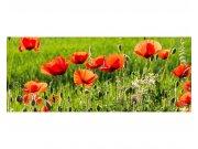 Panoramatické vliesové fototapety na zeď Makové pole | MP-2-0092 | 375x150 cm Fototapety vliesové