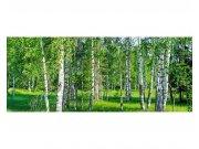 Panoramatické vliesové fototapety na zeď Březový háj | MP-2-0100 | 375x150 cm Fototapety vliesové