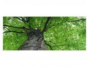 Panoramatické vliesové fototapety na zeď Koruna stromu | MP-2-0101 | 375x150 cm Fototapety vliesové