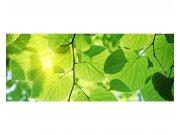 Panoramatické vliesové fototapety na zeď Zelené listy | MP-2-0107 | 375x150 cm Fototapety vliesové