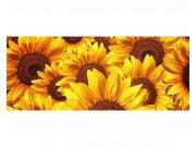 Panoramatické vliesové fototapety na zeď Lán slunečnic | MP-2-0129 | 375x150 cm Fototapety vliesové
