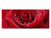 Panoramatické vliesové fototapety na zeď Červená růže | MP-2-0138 | 375x150 cm Fototapety vliesové