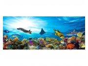 Panoramatické vliesové fototapety na zeď Ryby v oceánu | MP-2-0216 | 375x150 cm Fototapety vliesové