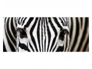Panoramatické vliesové fototapety na zeď Zebra | MP-2-0234 | 375x150 cm Fototapety vliesové