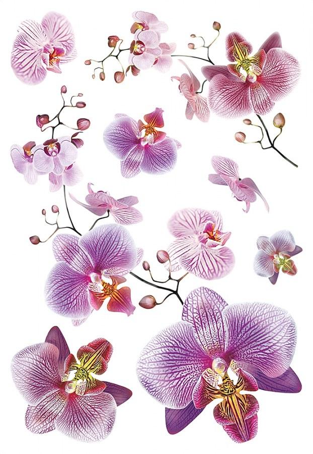 Samolepicí dekorace Orchidej SM-3440, rozměry 42,5 x 65 cm - Samolepící dekorace na zeď