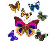 Samolepicí dekorace Barevní motýli SS-3854, 30x30 cm Samolepící dekorace na zeď