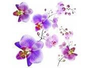 Samolepicí dekorace Orchidej SS-3859, 30x30 cm Samolepící dekorace na zeď