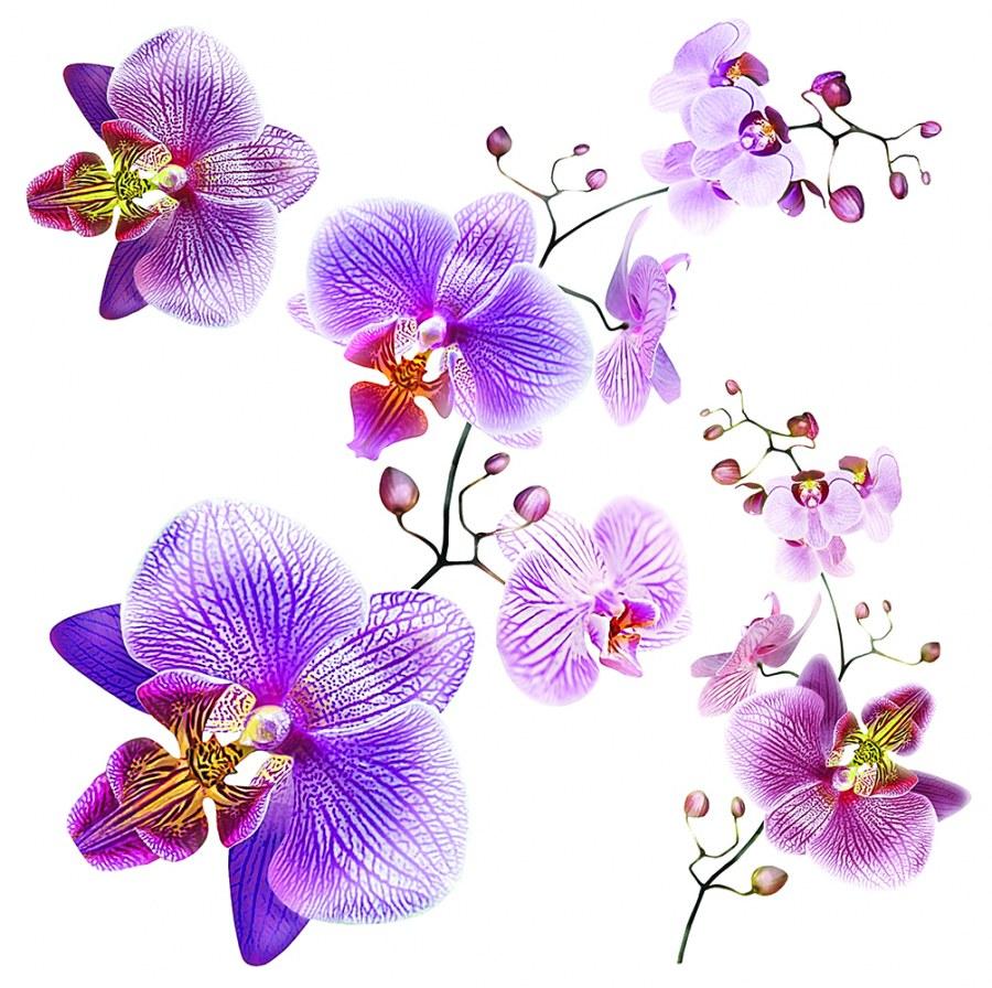 Samolepicí dekorace Orchidej SS-3859, 30x30 cm - Samolepící dekorace na zeď