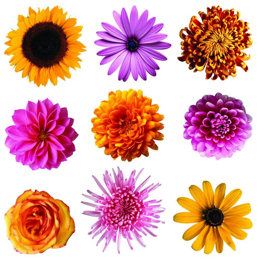 Samolepicí dekorace Květinky SS-3861, 30x30 cm - Samolepící dekorace na zeď