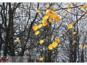 Fototapeta AG Still Alive FTNXXL-0317 | 360x270 cm Fototapety vliesové