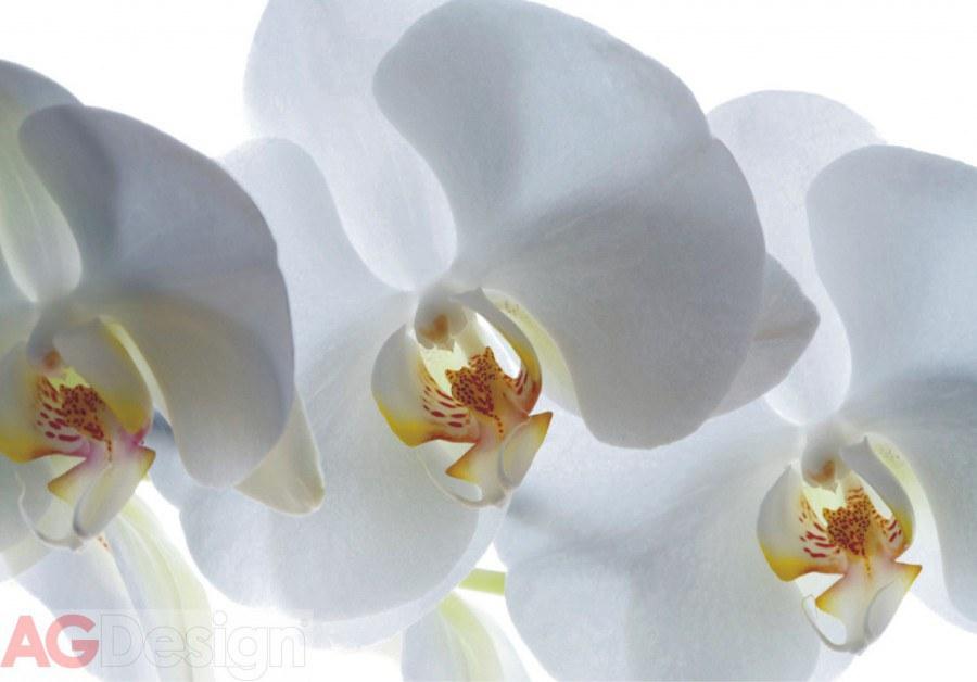 Vliesová fototapeta AG Design Bílá Orchidej FTNXXL-0466, rozměry 330 x 255 cm