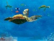 Fototapeta AG Nemo a velká Želva FTDXXL-2228 | 360x255 cm Fototapety pro děti
