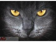 Fototapeta AG Eyes FTNM-2640 | 160x110 cm Fototapety vliesové