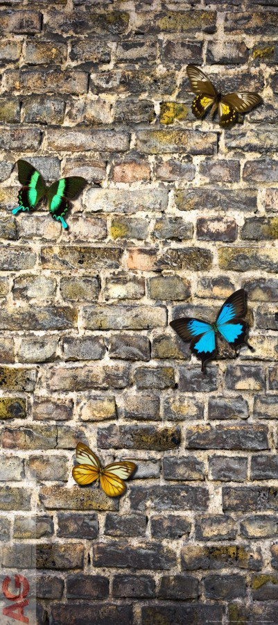 Fototapeta AG Butterfly on the Wall FTV-1519 | 90x202 cm