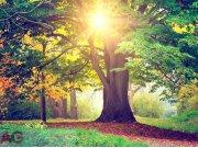 Fototapeta papírová Listnatý strom FTXXL-1464 | rozměry 360 x 255 cm Fototapety skladem