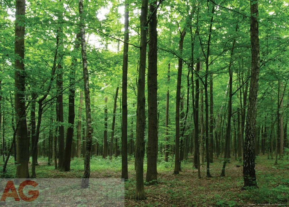 Vliesová fototapeta AG Design Listantý les FTNM-2656, rozměry 160 x 110 cm