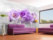 Fototapeta AG Orchid 3d FTNXXL-2400 | 360x270 cm Fototapety vliesové - Vliesové fototapety AG