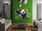 Fototapeta AG Panda FTNM-2610 | 160x110 cm Fototapety vliesové - Vliesové fototapety AG