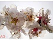 Fototapeta AG Tendermess FTNXXL-0385 | 360x270 cm Fototapety vliesové