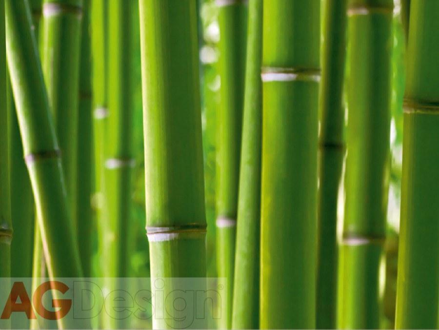 Papírová fototapeta Bambus AG design FTS-0170, rozměry 360 x 254 cm