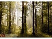Papírová fototapeta Ranní Les FTS-0181 | rozměry 360 x 254 cm Fototapety skladem