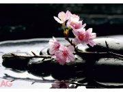 Fototapeta AG Kameny s květy FTS-0185 | 360x254 cm Fototapety na zeď